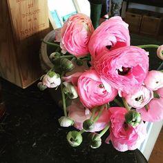 #南仏 #プロヴァンス #フランス #flowers #nature #naturelovers #flower #flowermagic #france #decor #spring #plants #peace #relax #pink #provence #lifestyle #花 #植物 #色 #春 #海外生活 #life #南フランス #relax #pretty #女子旅 #holiday #vacation #花のある暮らし