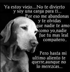 Awwww que triste me partio mi corazon😭😭😭😭😭😭😭😭😭😭😭😭😭😭😭😭😭😭😭😭😭 Animals And Pets, Baby Animals, Funny Animals, Cute Animals, I Love Dogs, Cute Dogs, Stop Animal Cruelty, Pug Puppies, Dogs Of The World