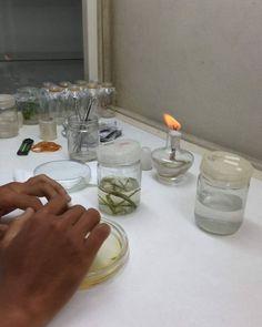 Persiapan inisiasi  #eshaflora #kulturjaringan #planttissueculture #tissueculture #skalarumahtangga #bogor #kultur #kuljar