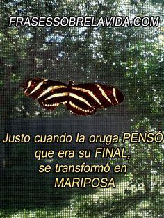 Justo cuando la oruga penso que esa su final, se transformó en mariposa.