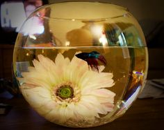 betta fish with flower