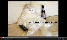 DELIKOMIK.COM DAN PAYLAŞMAYA DEĞER KOMİK VİDEOLAR: Kısa ve harika bir derleme: Çok Komik Kedi Videoları - http://delikomik.com/komik-kedi-videolari/