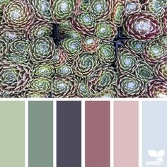 """Polubienia: 1,325, komentarze: 10 – Jessica Colaluca, Design Seeds (@designseeds) na Instagramie: """"today's inspiration image for { succulent hues } is by @suertj ... thank you, Sue, for another…"""""""