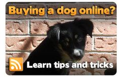 Be in the know to avoid puppy mill puppies! #pets #renspets #puppies