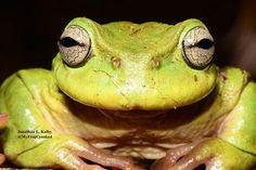 HARCC-Honduras Amphibian Rescue and Conservation Center's photo.