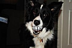CaliDogz Rogz Grinz Treat Ball Dog Toy, Medium Red