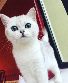 #cat #cats #gatos