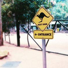 Up next... #kangaroo #currumbinwildlifesanctuary #queensland #goldcoast #sunshinestate #australia by jermgerm http://ift.tt/1X9mXhV