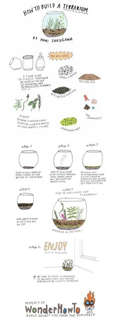 How to Build Your Own Terrarium...  Note to self:  Sphagnum moss can substitute for sheet moss.