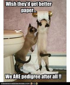 Animal humour