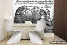 Fototapeten Rhinozeros_Dürer