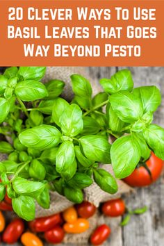 Fresh Basil Leaves, Fresh Herbs, Fresh Basil Recipes, Cooking Recipes, Healthy Recipes, Kitchen Recipes, Eat Healthy, Easy Herbs To Grow, Fruits And Veggies