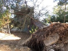 Capturing the Paso Robles Area with My Camera: If a Tree Fell and No One Heard It...