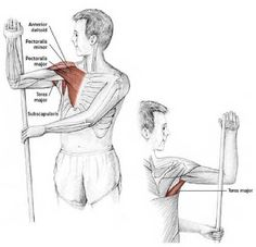 Easy Stretches to Release Tension in the Neck & Shoulders Shoulder Stretching Exercises, Neck And Shoulder Stretches, Neck Exercises, Easy Stretches, Neck Stretches, Shoulder Rehab, Shoulder Tension, Frozen Shoulder, Muscle Anatomy