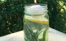 Lutte contre les moustiques:  voici un remède simple et surtout totalement naturel