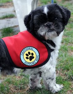 Mental Health Service Dog Vest