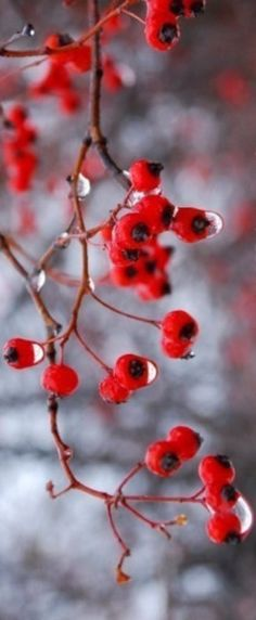 Nature's red. Beautiful.