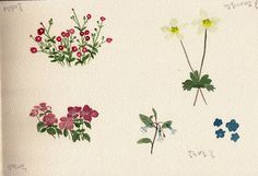 FLOWER FLOWER: 야생화 그려보기(plactice watercolor flowers)