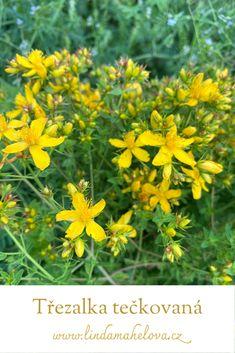 Health, Plants, Tela, Health Care, Planters, Healthy, Plant, Planting, Salud