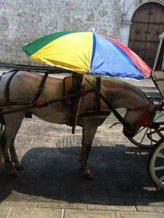 Incluso para proteger del sol a nuestros caballos - Porque también tienen derecho de ser protegidos