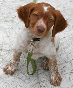 a Brittany, Prefontaine is her name
