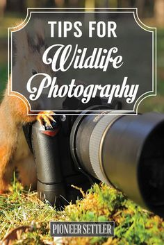 Tips for Wildlife Photography How To Capture Beautiful and Creative Pictures - Simple Tips and Ideas Anyone Can Do Wildlife Photography Tips, Landscape Photography Tips, Photography Basics, Photography Lessons, Photography For Beginners, Photography Camera, Outdoor Photography, Photography Tutorials, Creative Photography