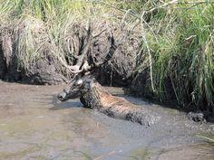 Fala upałów, które nękała Polskę aż do początku września, dała się we znaki zwierzynie. Stawy i sadzawki, służące jeleniom za wodopoje, wysychały, stając się śmiertelnymi pułapkami. Na szczęście myśliwi nie zawiedli, dowodząc, że łowiectwo to nie tylko i nie przede wszystkim polowanie.