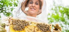 Bienen retten mit Urban Beeing & Stadtimkern? (Model Foto: Colourbox.de)