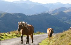 """Horses in the French Basque Country  """"would love to just jump on and ride away, its been tooooo looooong"""""""
