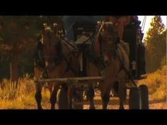The Chuck Wagon Dinner Experience at Paws Up