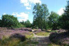 Grote Netewoud, Belsbroek en Heide in Meerhout & Geel