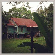 Casa abandonada, Col. Río de Piedras San Pedro Sula, Cabin, House Styles, Plants, Abandoned Homes, Rocks, Cabins, Cottage, Plant