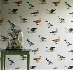 Golden Eye Wallpaper from Linwood Ephemera Wallpapers Collection. A wallpaper featuring catalogue style hand drawn pictures of ducks. Duck Wallpaper, Wallpaper For Sale, Eyes Wallpaper, Print Wallpaper, Fabric Wallpaper, Cool Wallpaper, Pattern Wallpaper, Linwood Fabrics, Beast's Castle