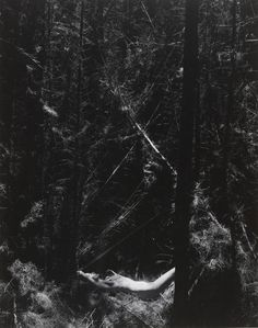 Forest Photography, Nude Photography, Center For Creative Photography, Dead Forest, My Fantasy World, Weird World, Museum Of Modern Art, Film Stills, Beast