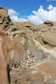Rocks and Shells! Auckland, Kiwi, New Zealand, Landscape Photography, Grand Canyon, Shells, Rocks, Vacation, Beach