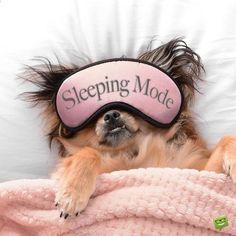 Good Night Meme, Funny Good Night Images, Funny Good Night Quotes, Good Night Prayer, Good Night Everyone, Good Night Friends, Good Night Blessings, Good Night Wishes, Have A Good Night
