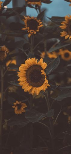 Tumblr Wallpaper, Iphone 8 Wallpaper, Sunflower Iphone Wallpaper, Best Iphone Wallpapers, Cute Wallpaper Backgrounds, Pretty Wallpapers, Aesthetic Iphone Wallpaper, Cool Wallpaper, Wallpaper Keren