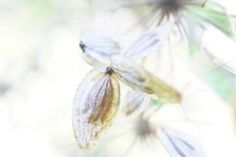 Flitting into the light - Limited Edition 1 of 4