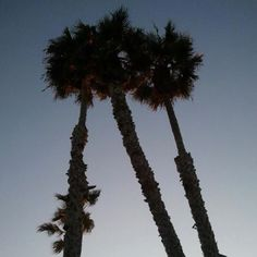 The palms in Cali.