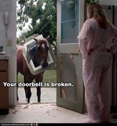 But I Made You a Doggie Door FOR FREE!