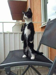 Overly Cute Cats That'll Make You Jealous You're Not Their Owner - Adorable Cats and Cute Kittens - Katzen Cute Cats And Kittens, I Love Cats, Crazy Cats, Cool Cats, Kittens Cutest, Ragdoll Kittens, Cute Funny Animals, Funny Animal Pictures, Cute Baby Animals