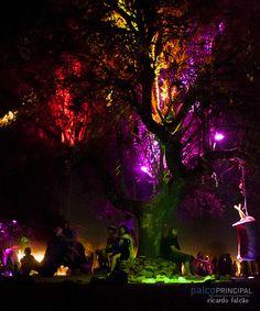 Boom Festival 2012 | Flickr - Fotosharing!