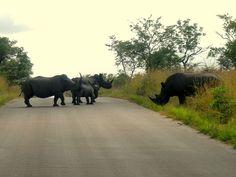 Kruger National Park Calendar - February  #travelplanning #southafrica #safari #kruger #travel