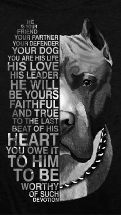 Uplifting So You Want A American Pit Bull Terrier Ideas. Fabulous So You Want A American Pit Bull Terrier Ideas. Pitbull Terrier, Bull Terriers, Pitbull Pups, Chihuahua Dogs, Terrier Mix, I Love Dogs, Cute Dogs, Bully Dog, Pit Bull Love