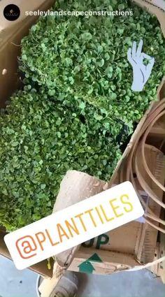 Ground Cover Plants, Tiles, Australia, Landscape, Green, House Ideas, Gardens, Room Tiles, Scenery