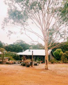 Foragers: Pemberton, Western Australia