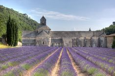 The mere mention of Provence conjures some the most idyllic images of lavender fields, sunflowers, olive groves, cicadas, vineyards and that indescribable light that inspired the post-impressionist painters like Cézanne.  You can follow in their footsteps, lounging at the cafes in Aix and heading