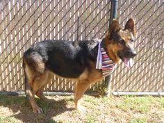 www.PetHarbor.com pet:NRCO.A035030