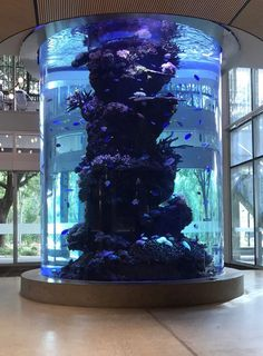 Big old reef tank at my uni. I enjoy it a lot Wall Aquarium, Big Aquarium, Home Aquarium, Aquarium Design, Reef Aquarium, Big Fish Tanks, Tropical Fish Tanks, Aquarium Architecture, Fish Tank Design