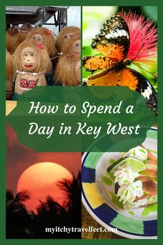 Travel tips for spending a day in Key West. Great ideas for an independent shore excursion or exploring Key West on your own. Travel Advice, Travel Tips, Travel Hacks, Travel Ideas, Travel Destinations, Visit Florida, Florida Vacation, Travel Usa, Solo Travel